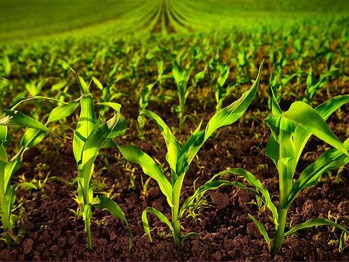 seedplus-toolkit.jpg