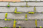 moss and algae growing on roofing shingles