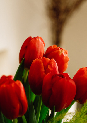 20-02-15 - Tulipanes-7.jpg