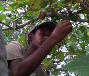 Sassafras Earth Education