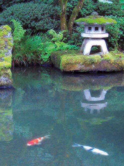 Pagoda / Koi Pond - 8x10 Fine Art Giclee Print