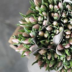 Kunde: Florentes