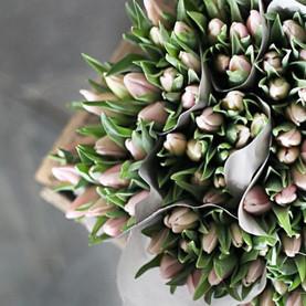 Florentes