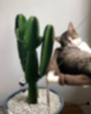 animal-cactus-cat-699962.jpg