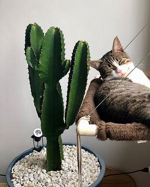 animal-cactus-cat-699962.jpg