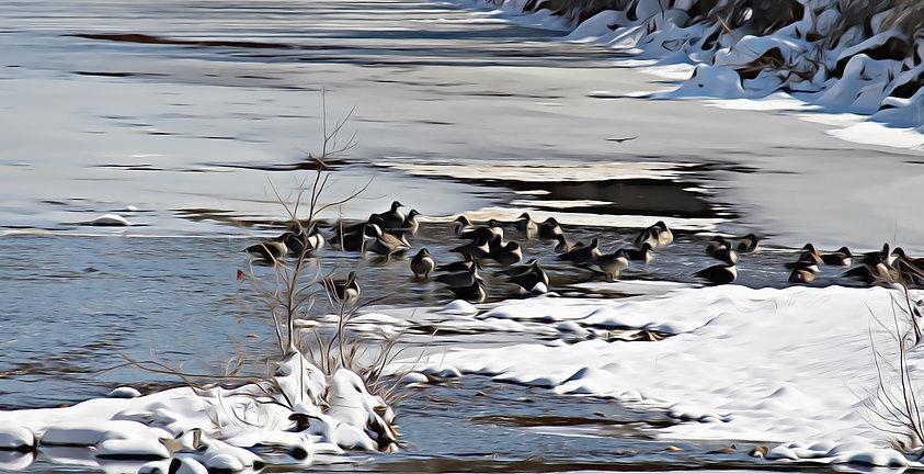 Ducks Snow_Underpainting.jpg