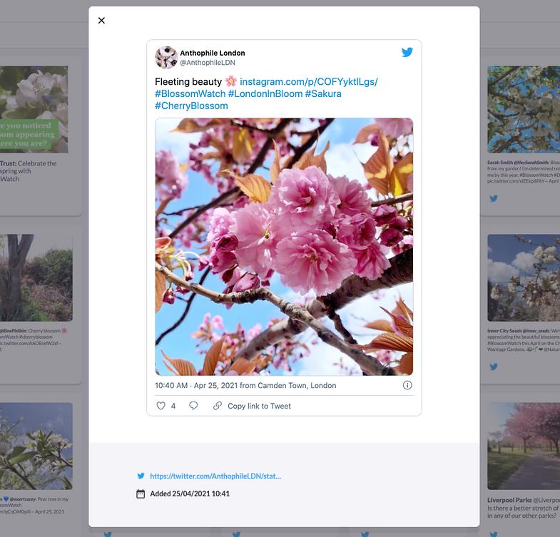 Celebrating the joys of spring on social media