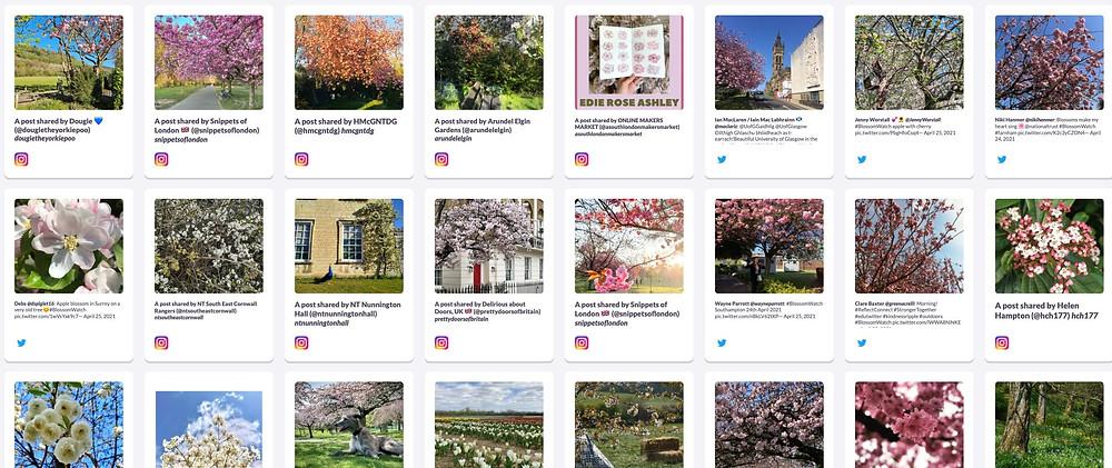 #BlossomWatch on Shooglebox