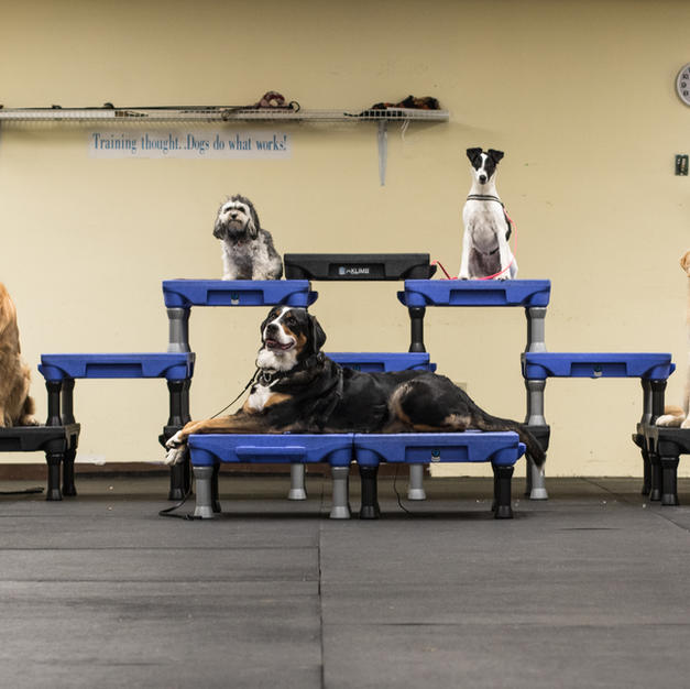 FAMILY DOG CLASSES