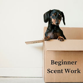 BeginnerScent Work.jpg