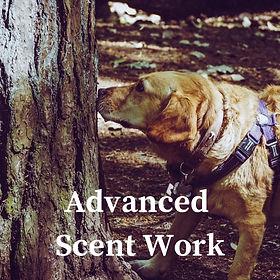 BeginnerScent Work (2).jpg
