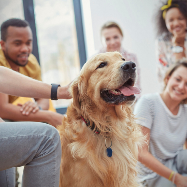THERAPY DOG CLASSES