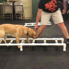 CANINE CONDITIONING
