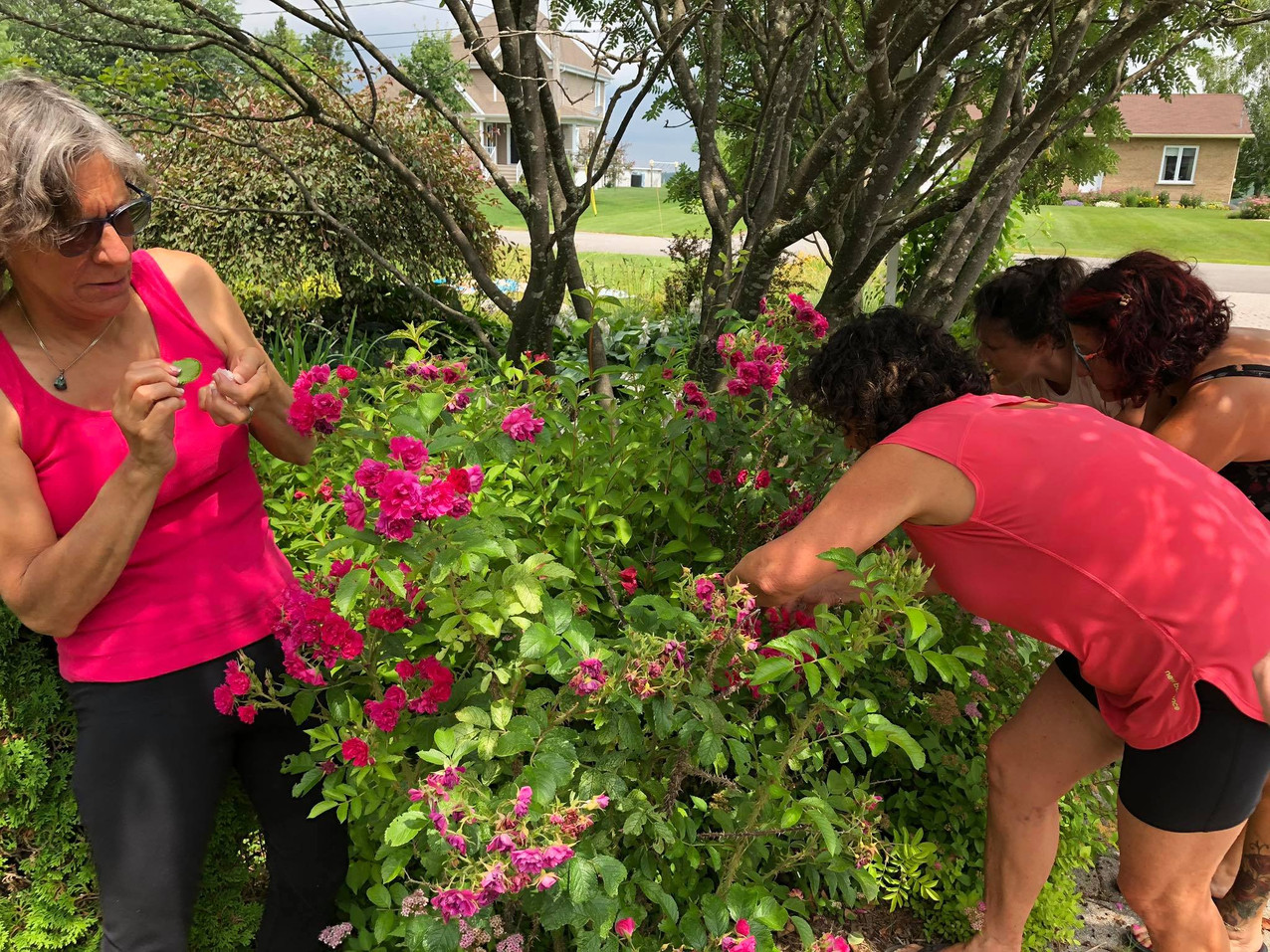 L'élixir de roses