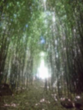 bambouIMG-20190107-WA0004.jpg