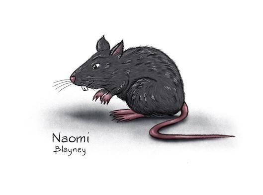Character Development Rat