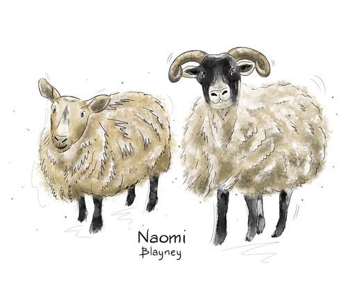 Sheep Character Development