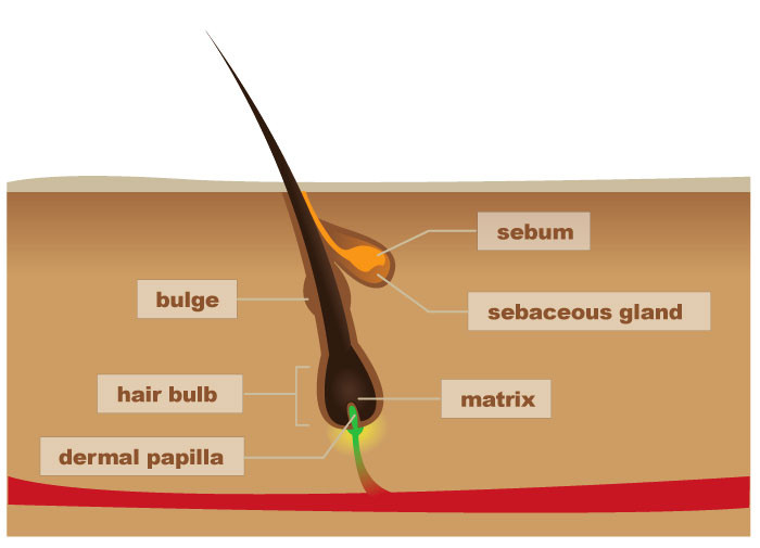 Information about the process of hair growth after a brazilian waxing