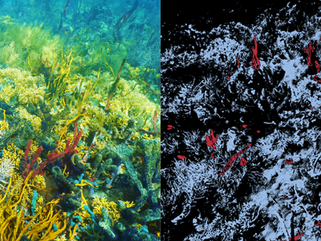 Ecotone - Underwater Hyperspectral Imaging