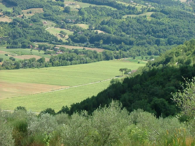Castagna Alta Vista