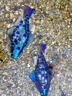 Rainbow Fish Detail
