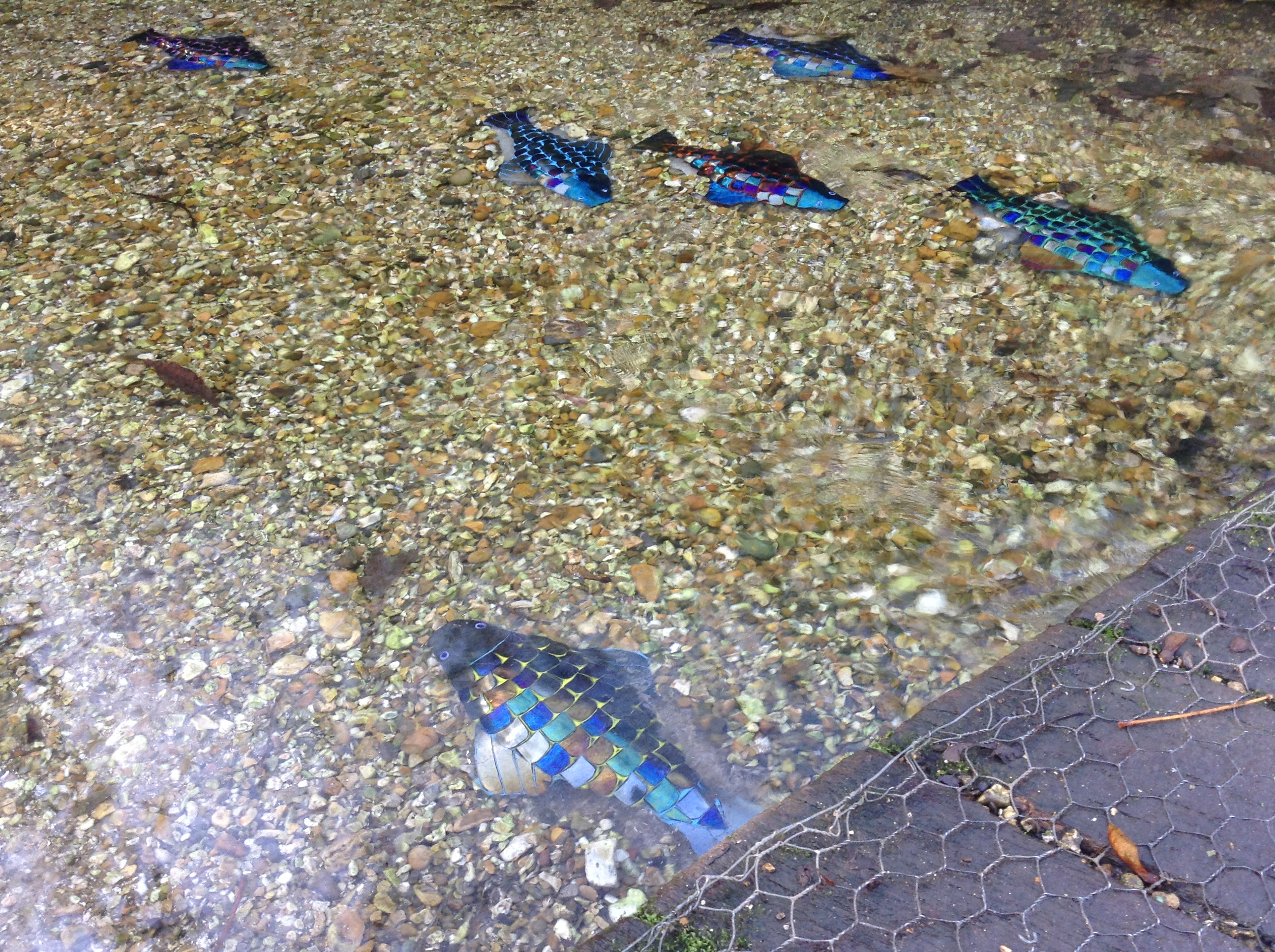 Rainbow Fish under Bridge