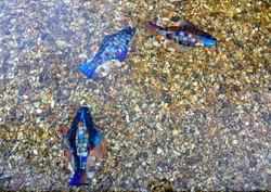 Rainbow Fish Circle