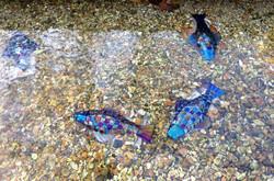 Rainbow Fish in circles