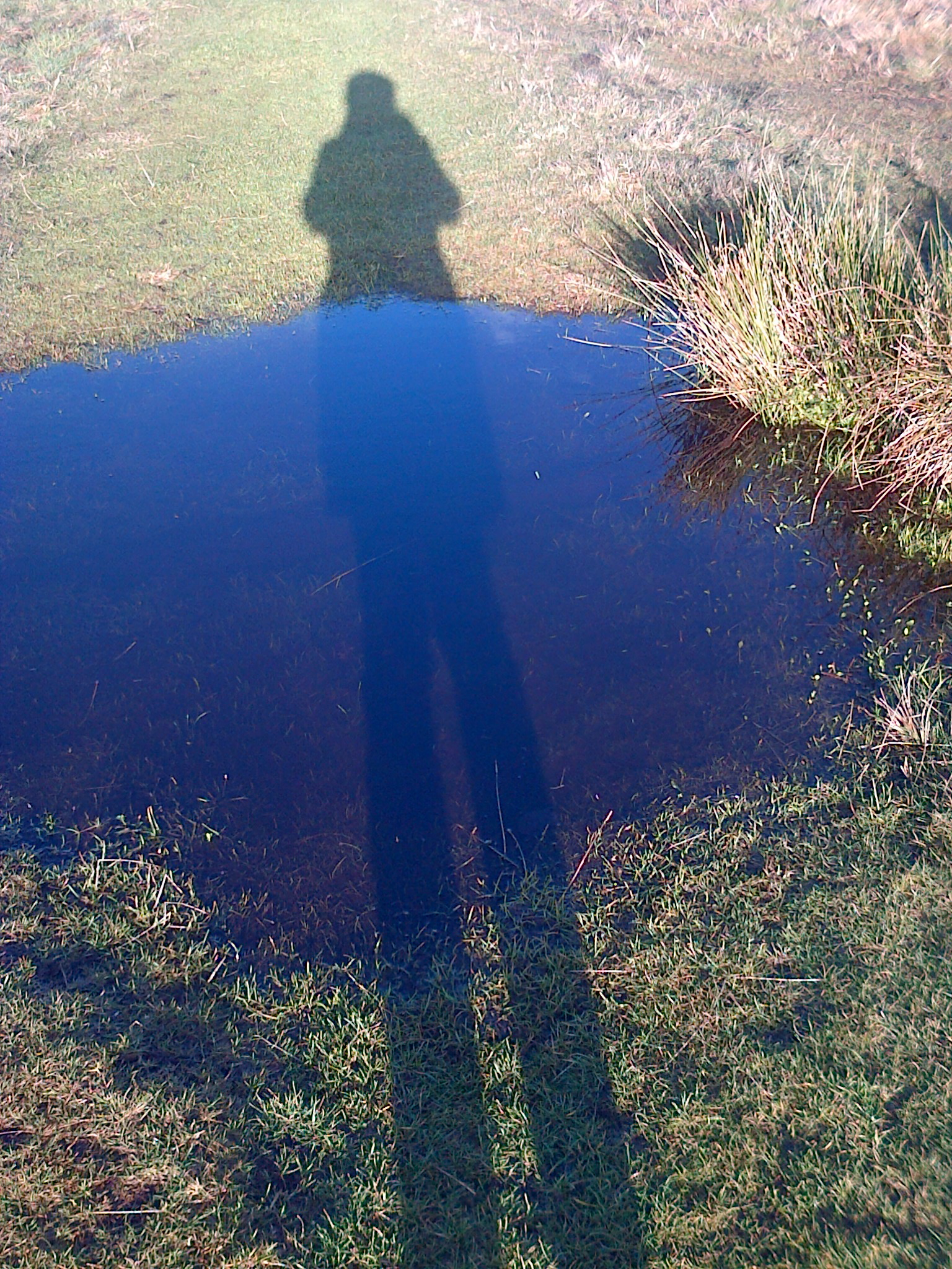 Puddle Shadow - June