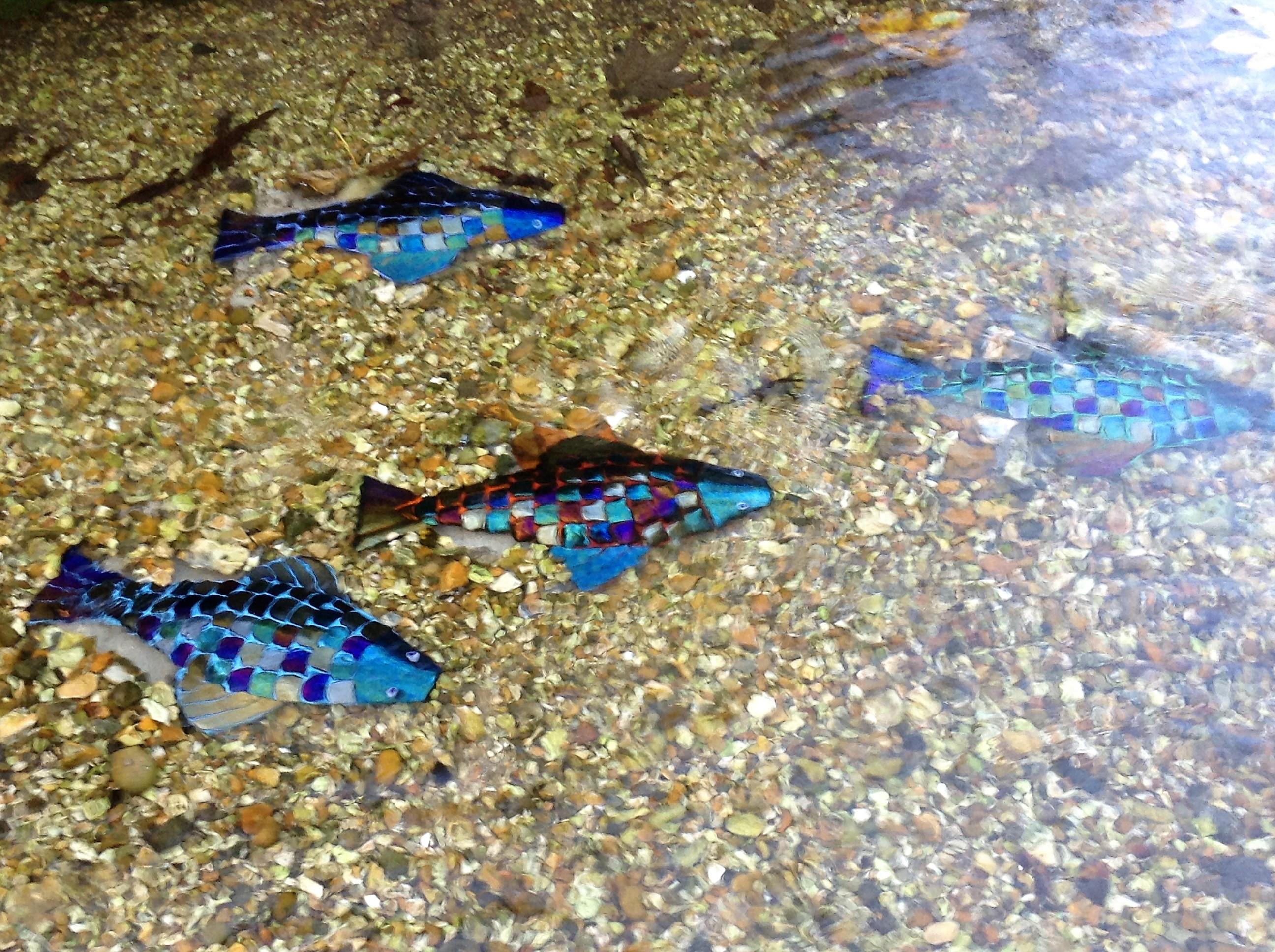Rainbow Fish Shoal