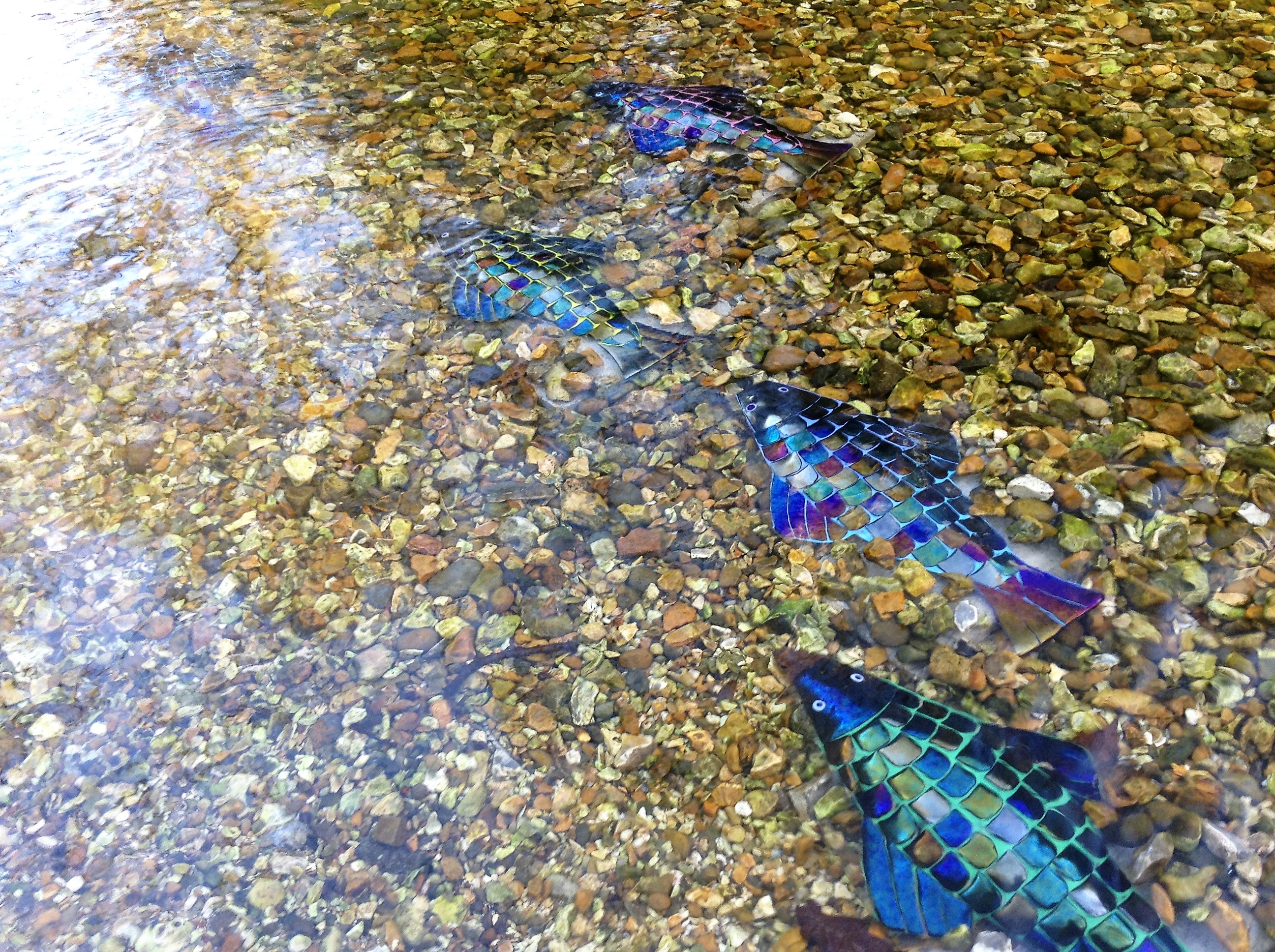 Rainbow Fish Upstream