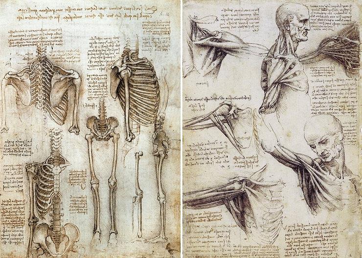 Leonardo-da-Vinci-the-Anatomical-Artist2-3568886.jpg