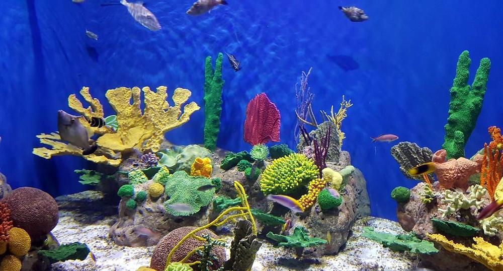 AquaRio, um point na zona portuária da cidade ( Foto: divulgação)