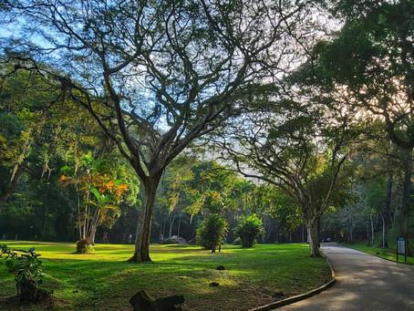 No Rio, o verde do Parque da Cidade