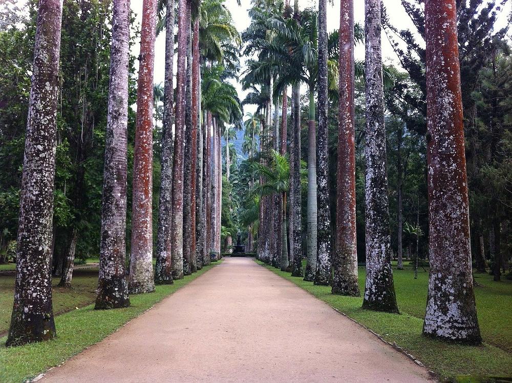 Alameda com as famosas palmeiras na entrada do Jardim Botânico (Foto: Pixabay)