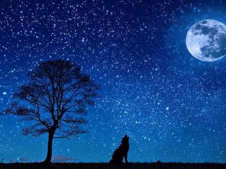 A força astrológica da semana e a lua nova de Aquário