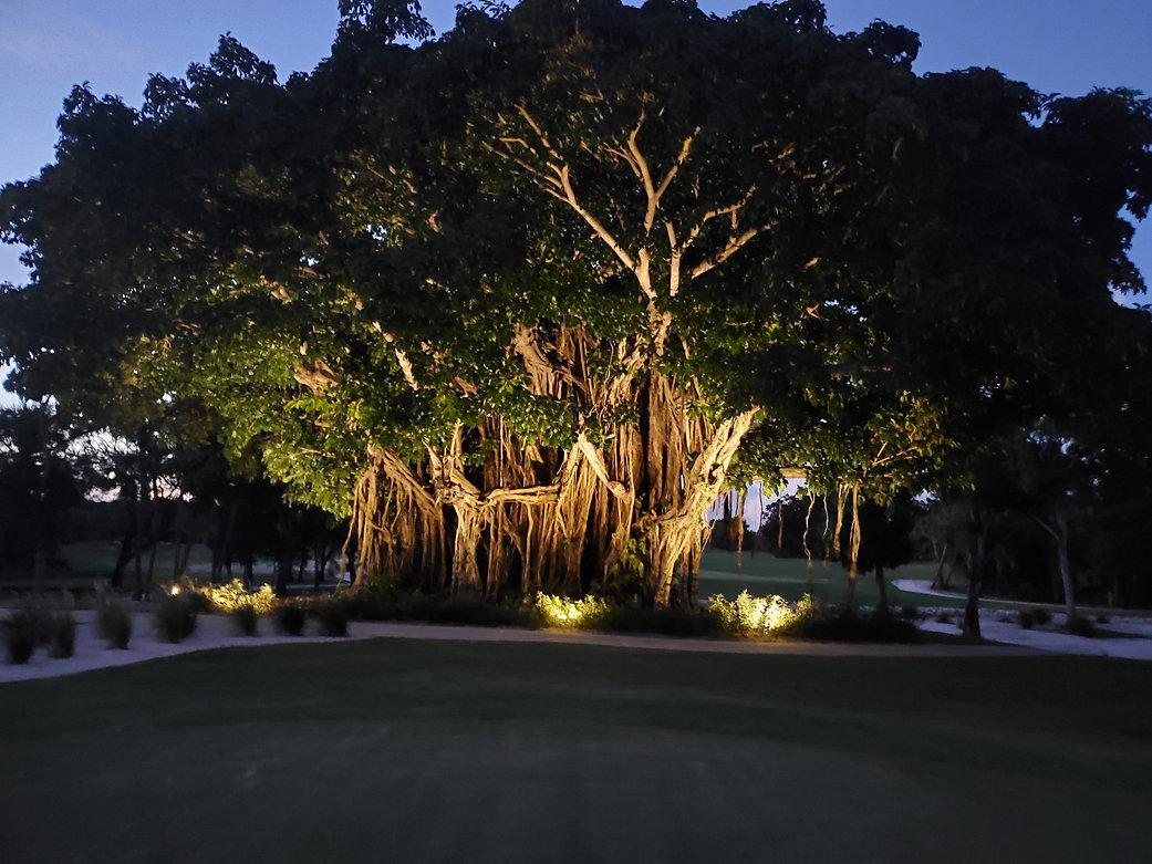20 Banyan Tree at Nite.2.jpg