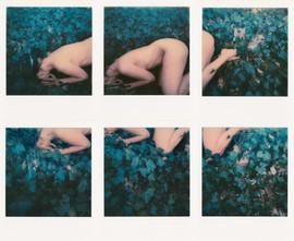 Polaroid Akt - sechsteilig
