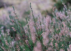 Awesome ways to incorporate heather