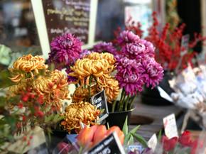 In defense of chrysanthemums