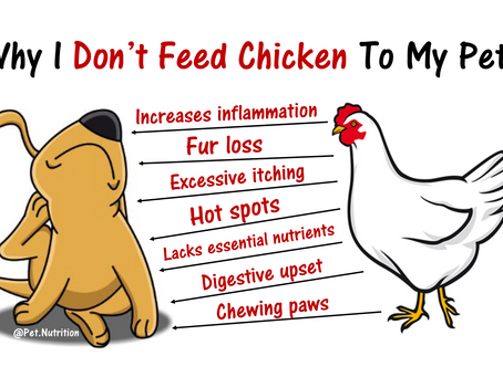 Why I Don't Feed Chicken To My Pets