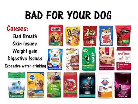 Bad For Your Dog