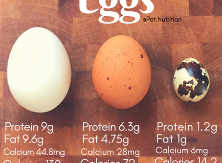 Nutrients and Benefits of Eggs for Dogs and Cats