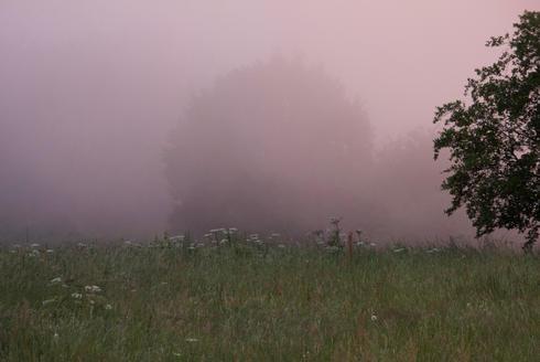 Jardin et brume 2