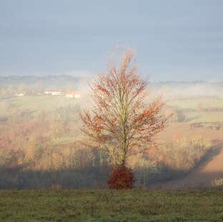 Arbre seul - automne 1