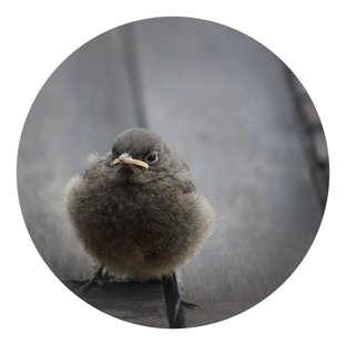 Tombé du nid