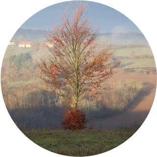 Arbre seul automne 1