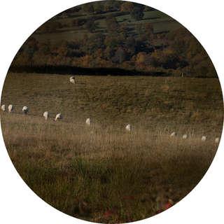 Moutons d'ici