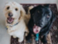 ペットホテル for Dogs