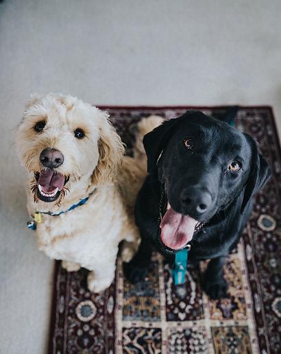 犬の保育園 Allenatore(アレナトーレ) は、愛犬・愛猫との365日をサポートします